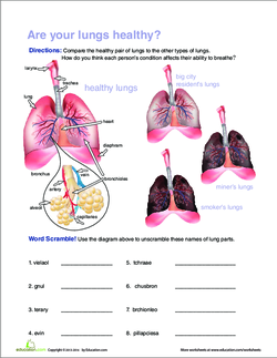 Breathe in breathe out the respiratory system lesson plan introduction ccuart Image collections