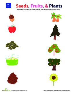 Seeds, Fruits & Plants