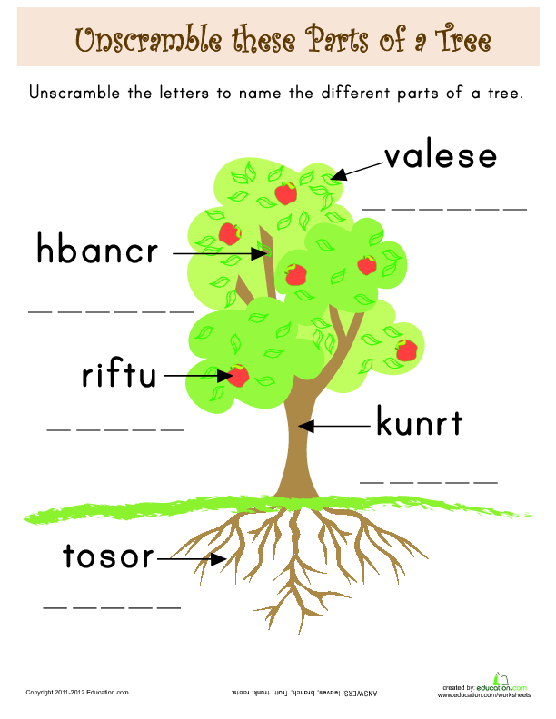 The Giving Tree  Identifying Story Elements   Lesson Plan
