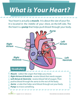 What is Your Heart