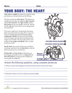Your Body: The Heart