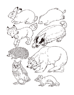 Animals Sheet