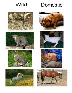 Wild vs. Domestic Animals