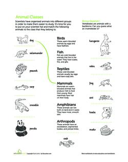 image about Free Printable Worksheets on Vertebrates and Invertebrates known as Vertebrate or Invertebrate? Lesson Application
