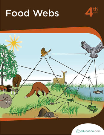 Fourth Grade Science Workbooks: Food Webs