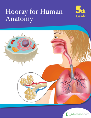 Fifth Grade Science Workbooks: Hooray for Human Anatomy