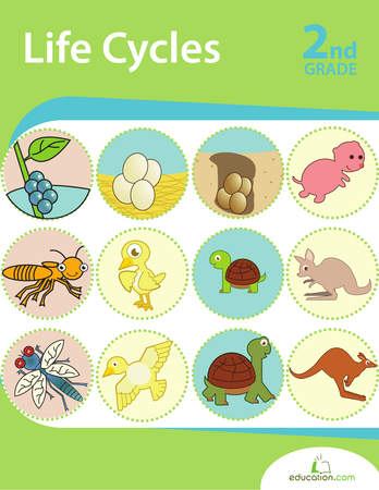 Second Grade Reading & Writing Workbooks: Life Cycles