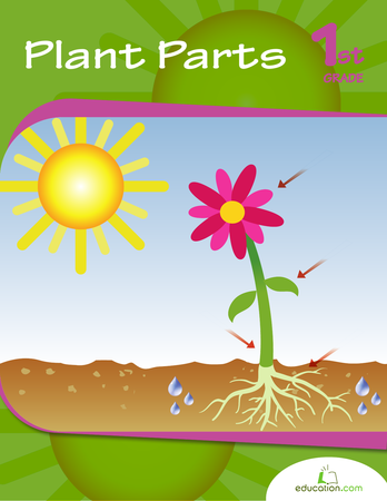 First Grade Reading & Writing Workbooks: Plant Parts