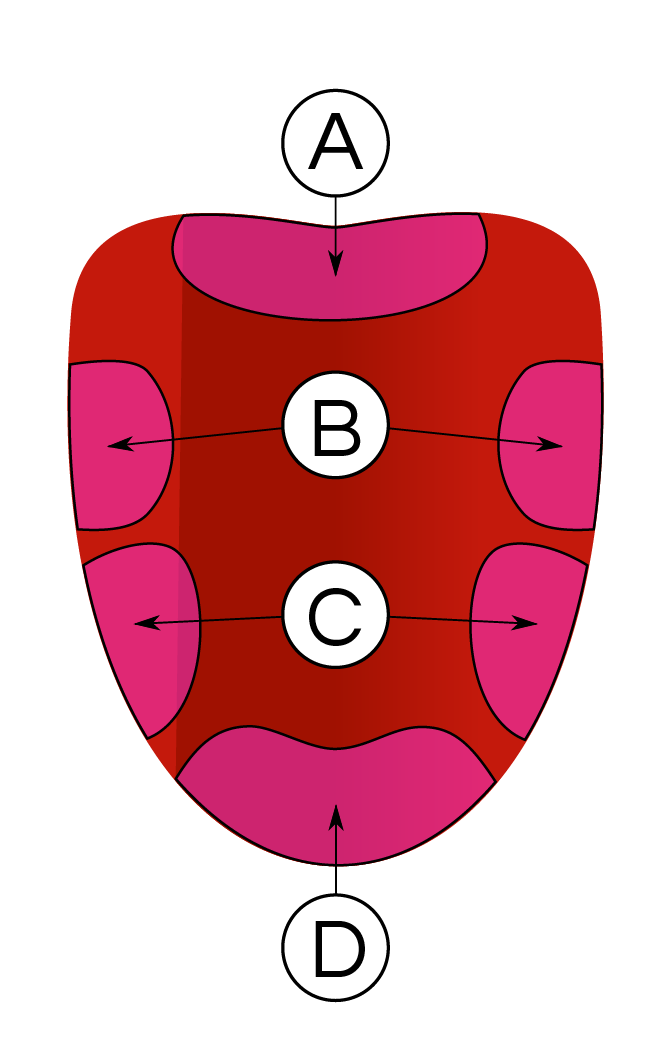 Taste Areas of the Tongue Diagram