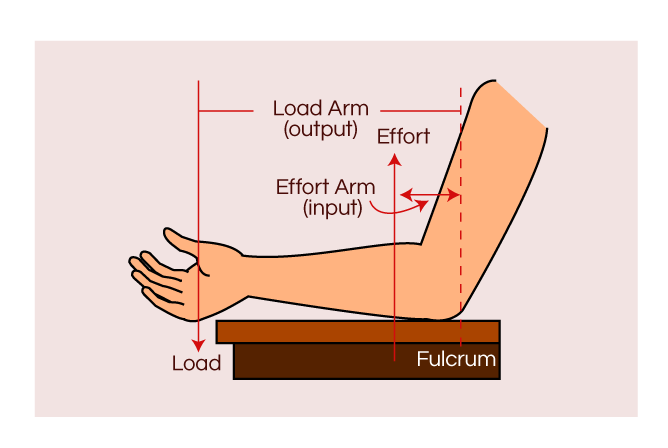 Human Arm Lever Diagram