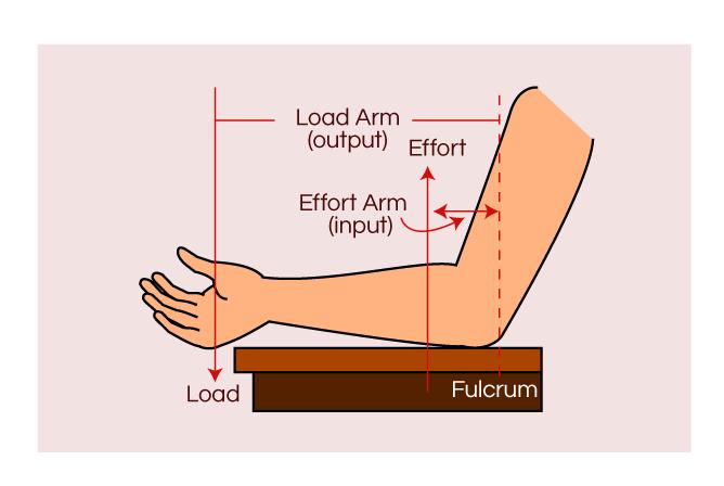 Human Arm Lever Diagram