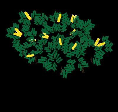 Legume Plant