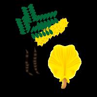 Legume Plant Detail