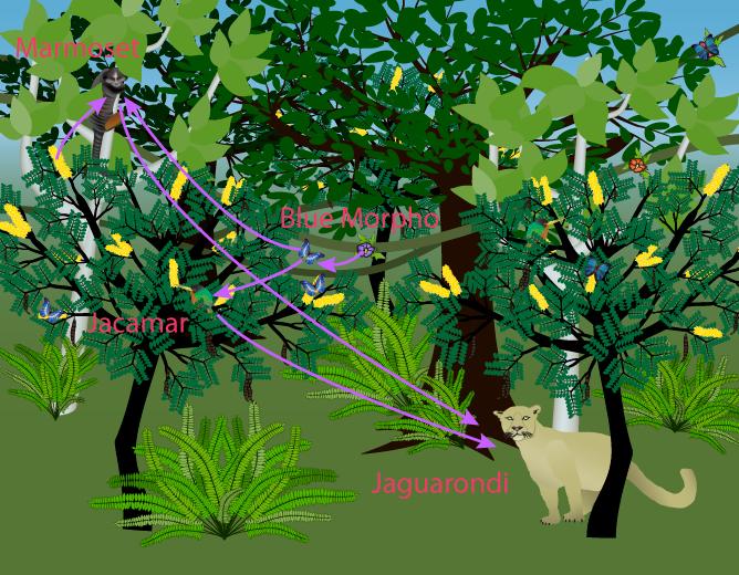 Rainforest Food Web Small