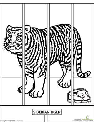 Second Grade Coloring Worksheets: Color the Zoo Tiger