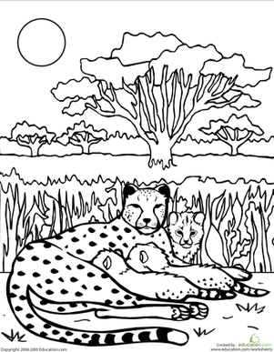 Second Grade Coloring Worksheets: Color the Cheetah Family