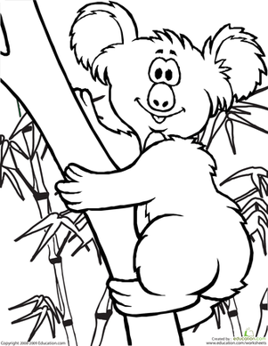 Color the Koala