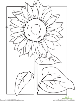 First Grade Coloring Worksheets: Color the Sunflower!