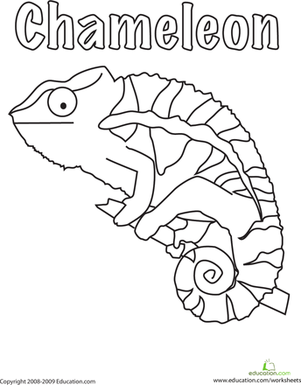 color the chameleon coloring page