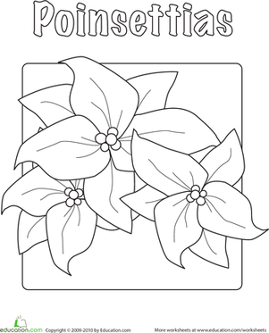 poinsettia worksheet education