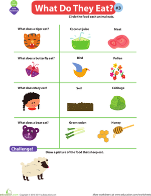 First Grade Science Worksheets: What Do Animals Eat? #3