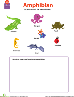 critter classification amphibians worksheet. Black Bedroom Furniture Sets. Home Design Ideas