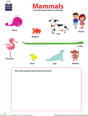 Printables Mammal Worksheets mammals for kids worksheet education com