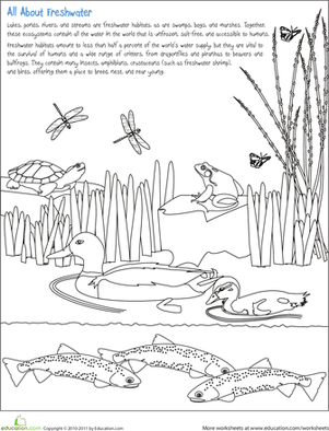Second Grade Holidays & Seasons Worksheets: Color the Freshwater Habitat