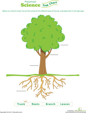 preschool science worksheets test your tree knowledge part of
