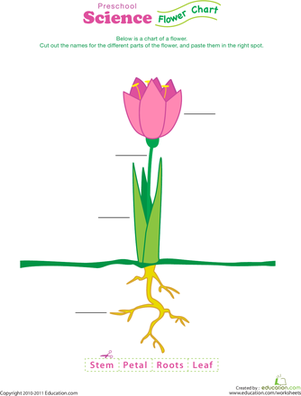 Complete a Flower Fill-In! | Worksheet | Education.com