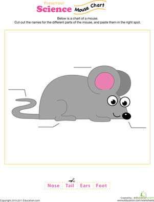 Preschool Science Worksheets: Mouse Anatomy Diagram