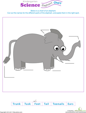 Kindergarten Science Worksheets: Animal Science: Elephant Anatomy