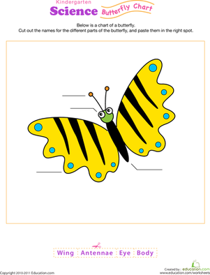 Kindergarten Science Worksheets: Butterfly Anatomy