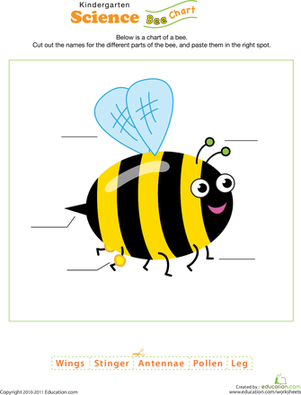Kindergarten Science Worksheets: Bee Science!