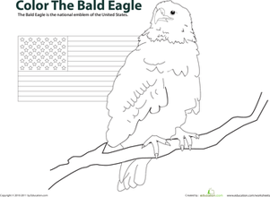 First Grade Social Studies Worksheets: Color the Bald Eagle