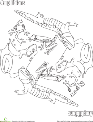 Kindergarten Coloring Worksheets: Amphibians Coloring Page
