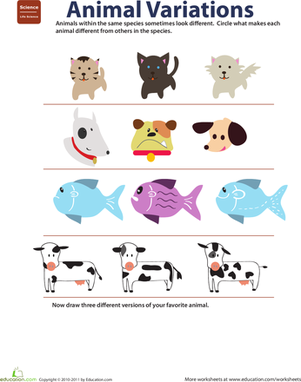 Second Grade Science Worksheets: Variation in Animals: Life Science Learning