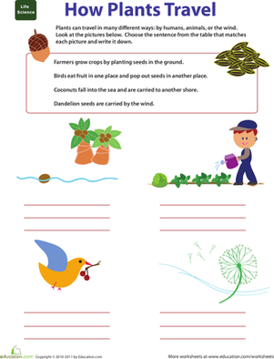 Second Grade Science Worksheets: Plant Matters: How Plants Travel