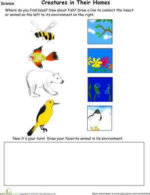 Kindergarten Science Worksheets: Animal Habitat Drawing Page