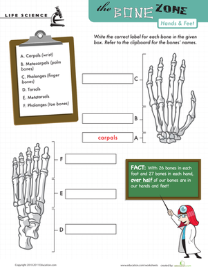Fifth Grade Science Worksheets: Learn the Bone Zone: Hands and Feet
