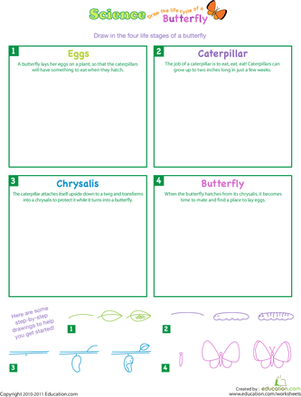 First Grade Science Worksheets: Draw the Life Cycle of a Butterfly