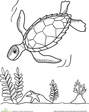 Kindergarten Coloring Worksheets: Sea Turtle Coloring Page