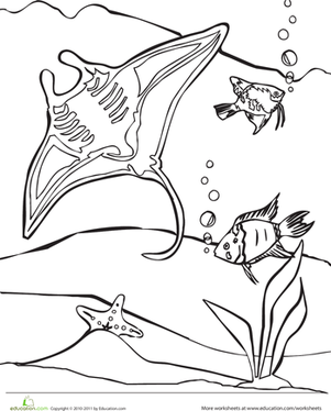 Kindergarten Coloring Worksheets: Color the Manta Ray