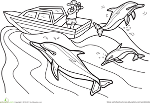 First Grade Coloring Worksheets: Color the Dolphin Photographer