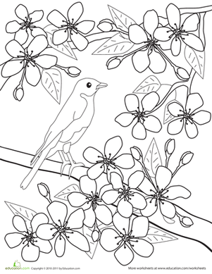 Color the Flowers Cherry Blossoms Worksheet Educationcom