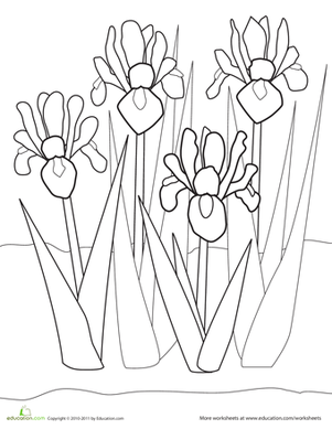 First Grade Coloring Worksheets: Iris Coloring Page