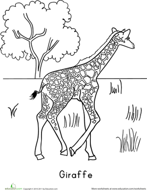 Kindergarten Coloring Worksheets: Color the Giraffe