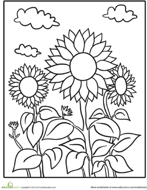 Kindergarten Coloring Worksheets: Sunflower Patch Coloring Page