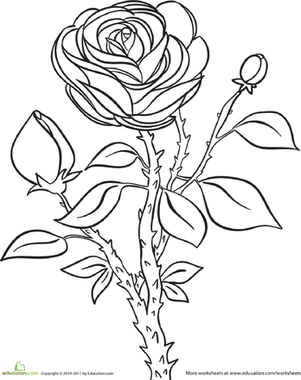 Kindergarten Coloring Worksheets: Rose Coloring Page