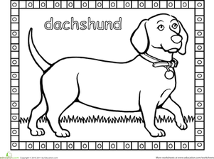 Kindergarten Coloring Worksheets: Dachshund Coloring Page